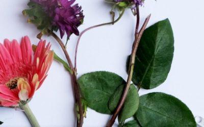 Ist Naturkosmetik wirklich besser?