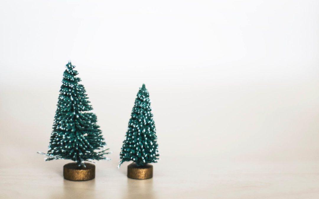 Oh Tannenbaum: Überzeugende Gründe für einen Öko-Christbaum