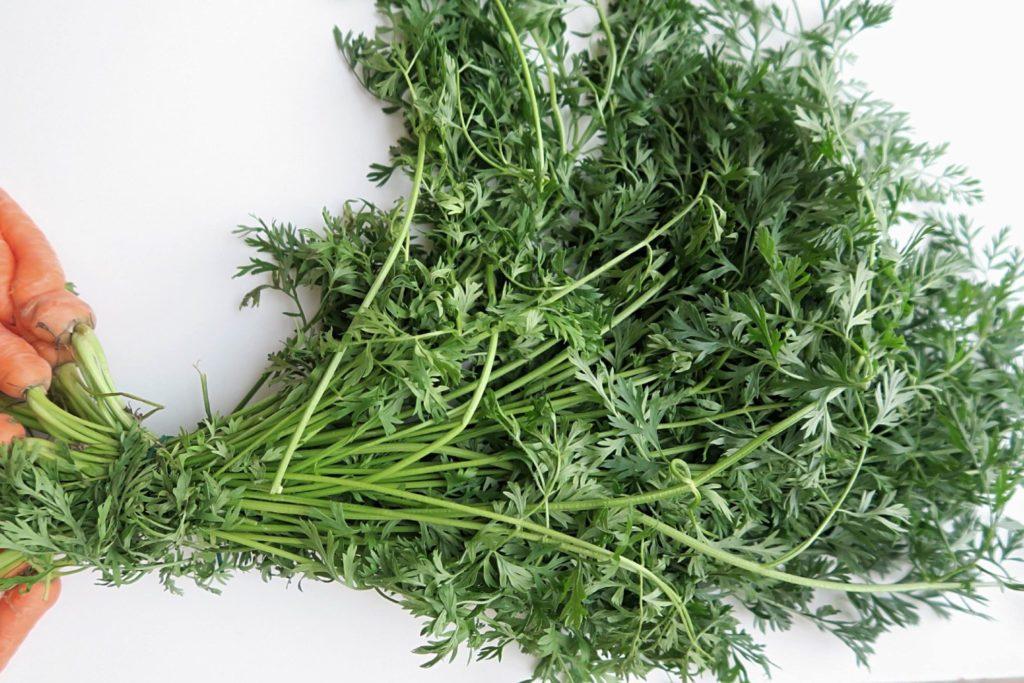Möhrengrün: Viele wissen nicht, dass das Kraut von Karotten essbar ist. Das ist eine Ursache von Lebensmittelverschwendung.