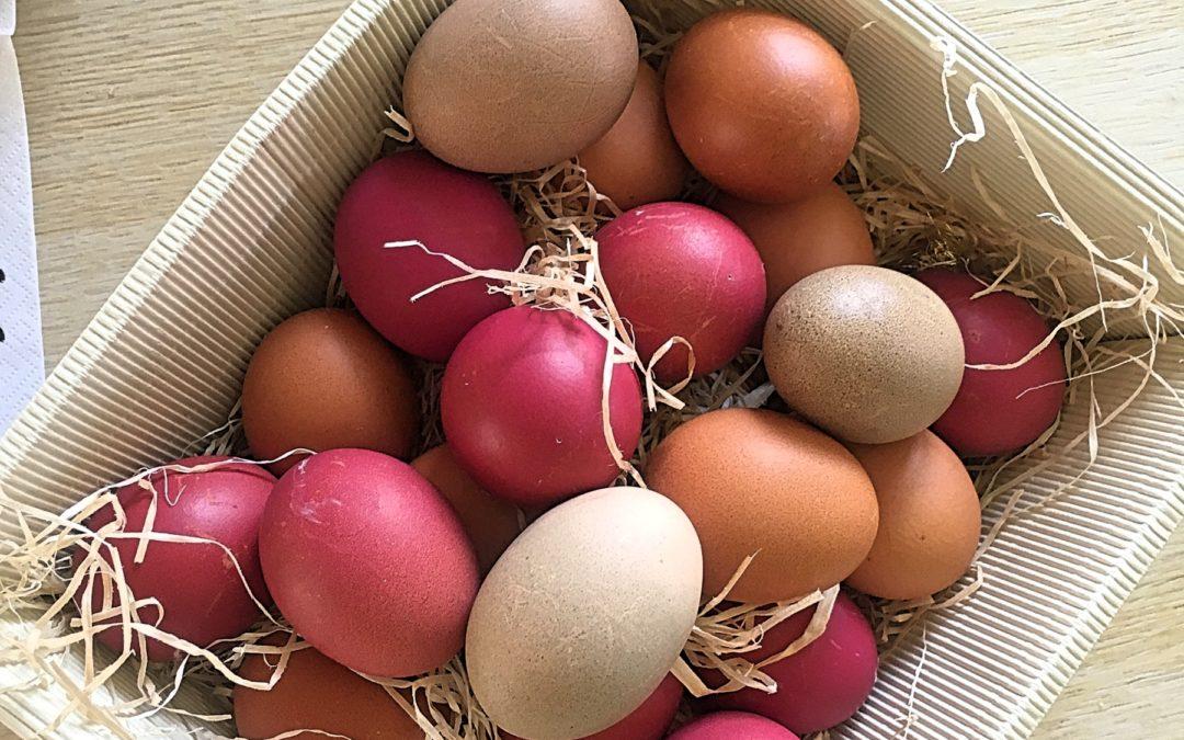Ostern: Warum du keine gefärbten Eier kaufen solltest – 6 Fakten rund um das Ei