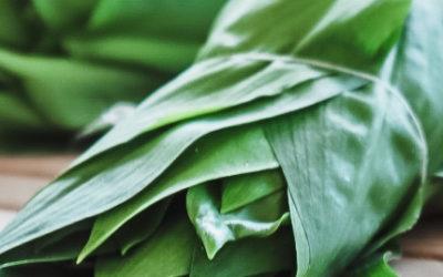 Bärlauch Saison – Meine liebsten Bärlauch Rezepte + wichtige Tipps zum Sammeln