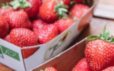 Erdbeeren voller Pestizide? Darum solltest du nur Bio Erdbeeren kaufen