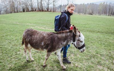 Eselwandern im bayerischen Wald: So war mein etwas anderer Retreat