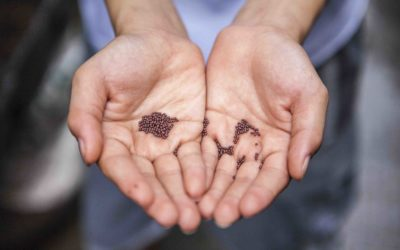 Wer die Saat hat, hat die Macht: Was du unbedingt über Saatgut wissen musst