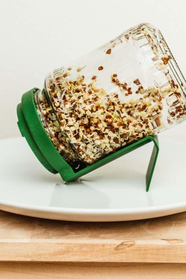 Sprossen Ziehen: Ein Sprossenglas steht auf einem weißem Teller. Im Glas sind gekeimte Radieschen Sprossen.