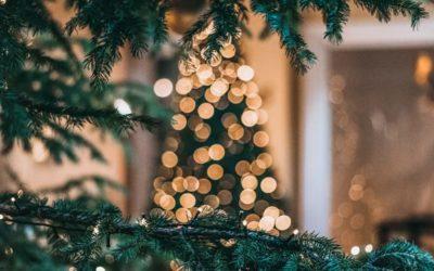 Öko Christbaum: Warum auch dein Weihnachtsbaum bio & fair sein sollte