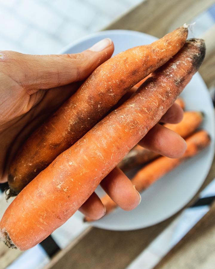 Eine Hand hält zwei Karotten mit braunen Stellen