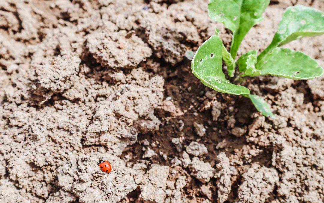 Artenvielfalt: Warum Bio Landwirtschaft für die Biodiversität so wichtig ist / BIO ABC