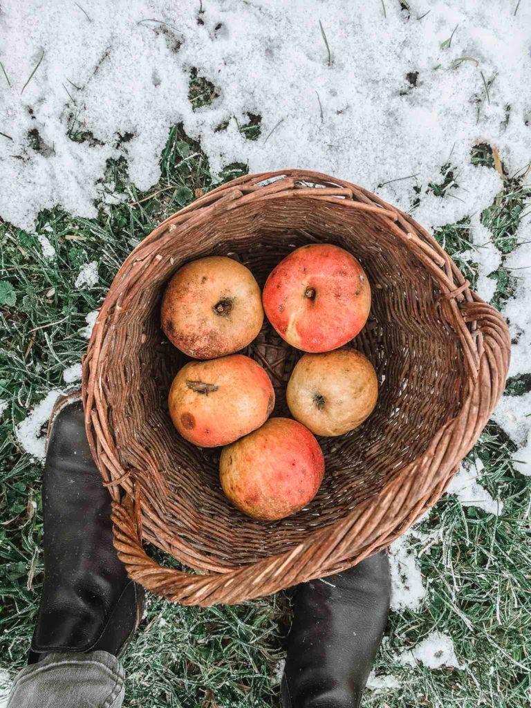 Saisonales Obst im Winter sind Lageräpfel