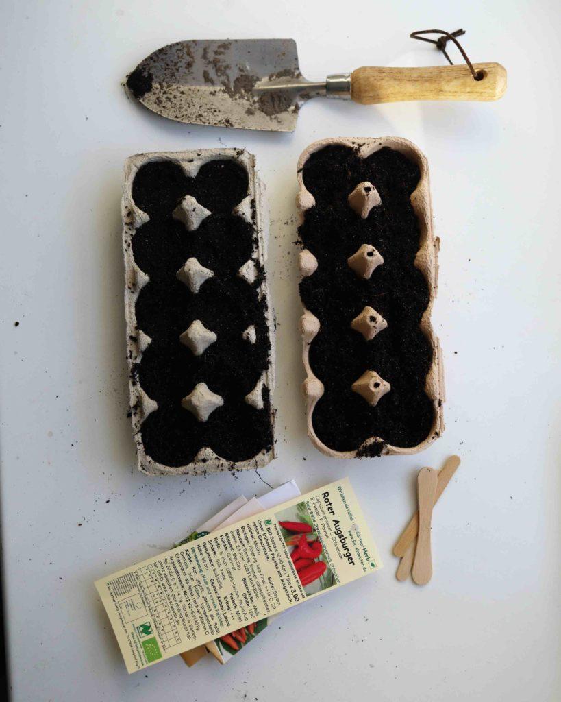 Gemüse selber anbauen: Für die Vorzucht eignet sich ein gebrauchter Eierkarton